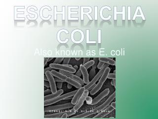 Also known as E. coli