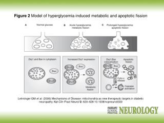 Figure 2  Model of hyperglycemia-induced metabolic and apoptotic fission
