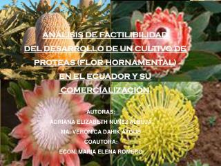ANÁLISIS DE FACTILIBILIDAD DEL DESARROLLO DE UN CULTIVO DE PROTEAS (FLOR HORNAMENTAL)