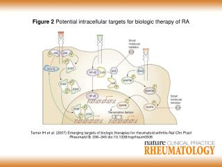 Figure 2  Potential intracellular targets for biologic therapy of RA