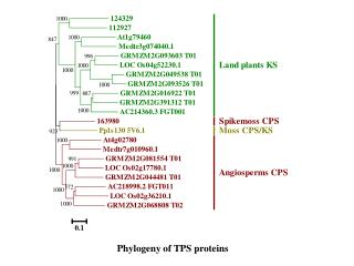 P hylogeny  of TPS proteins