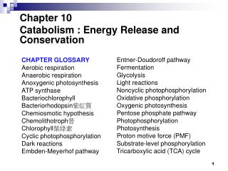 Chapter 10 Catabolism : Energy Release and Conservation