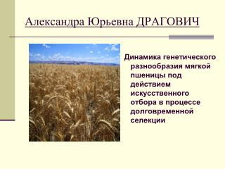 Александра Юрьевна ДРАГОВИЧ