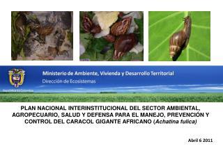 Phylum :  Mollusca Clase:  Gastropoda Superfamilia :  Achatinoidea Swainson , 1840