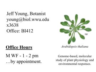 Jeff Young, Botanist young@biol.wwu x3638 Office: BI412