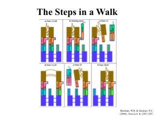 The Steps in a Walk