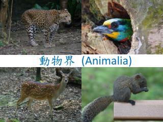 動物界  (Animalia)
