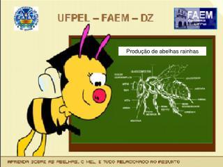 Produ��o de abelhas rainhas