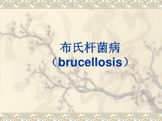 布氏杆菌病 ( brucellosis )