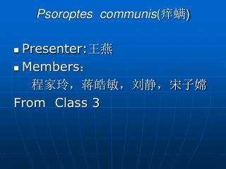 Psoroptes  communis ( 痒螨 )