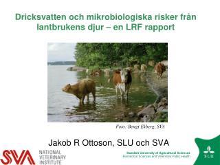 Dricksvatten och mikrobiologiska risker från lantbrukens djur – en LRF rapport