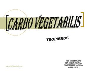 CARBO VEGETABILIS