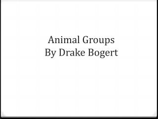 Animal Groups By Drake Bogert