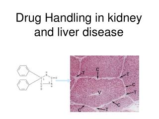 Drug Metabolism: Factors