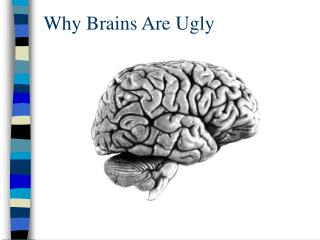 Why Brains Are Ugly