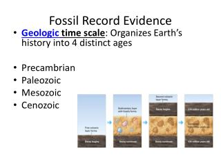 Fossil Record Evidence