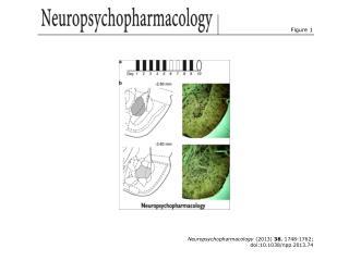 Neuropsychopharmacology  (2013)  38 , 1748-1762; doi:10.1038/npp.2013.74