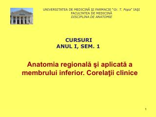 Anatomia regională şi aplicată a membrului inferior. Corelaţii clinice