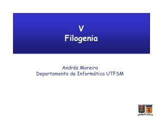 V Filogenia