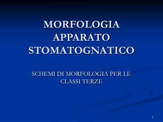 MORFOLOGIA APPARATO STOMATOGNATICO