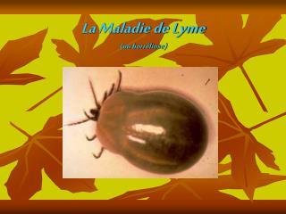 La Maladie de Lyme (ou borréliose)