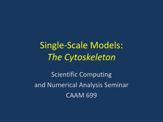 Single-Scale Models: The Cytoskeleton