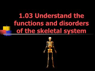 1.03 Understand the functions and disorders of the skeletal system