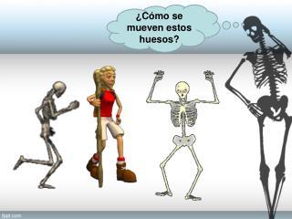 ¿Cómo se mueven estos huesos?