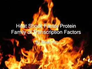 Heat Shock Factor Protein Family of Transcription Factors