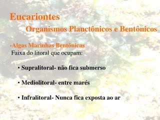 Eucariontes  Organismos Planct nicos e Bent nicos  -Algas Marinhas Bent nicas  Faixa do litoral que ocupam:   Supralitor