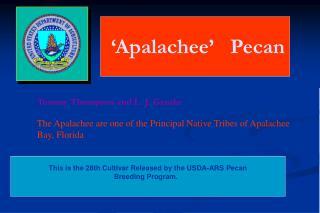 'Apalachee'   Pecan