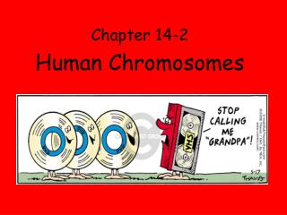 Chapter 14-2 Human Chromosomes