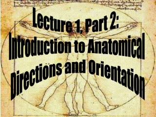 Lecture 1, Part 2:   Introduction to Anatomical  Directions and Orientation