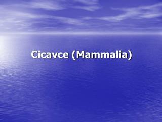 Cicavce Mammalia