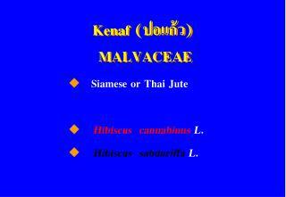 Kenaf    MALVACEAE