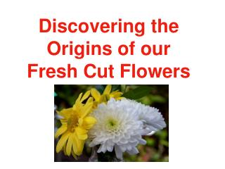 Discovering the Origins of our Fresh Cut Flowers