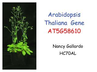 Arabidopsis Thaliana  Gene AT5G58610