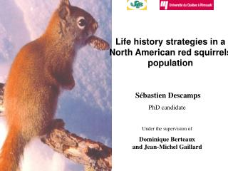 Life history strategies in a North American red squirrels population