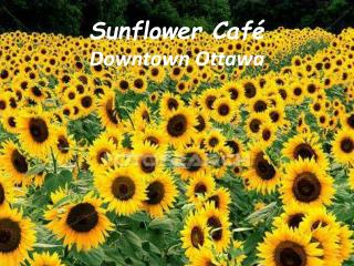 Sunflower Café Downtown Ottawa