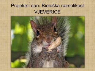Projektni dan: Biološka raznolikost VJEVERICE