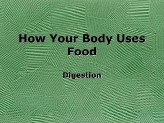 How Your Body Uses Food