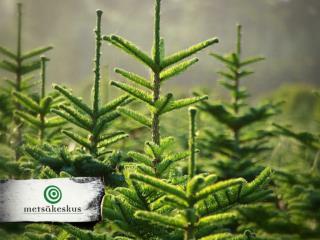Metsänhoidon suositukset Eri-ikäisrakenteisen metsän kasvatus
