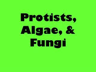 Protists , Algae, & Fungi