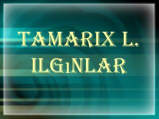 Tamarix L. Ilgınlar