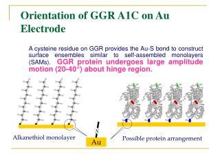 Orientation of GGR A1C on Au Electrode