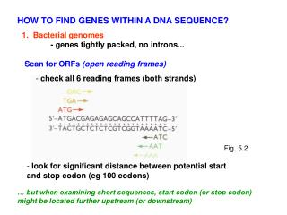 1.  Bacterial genomes - genes tightly packed, no introns...
