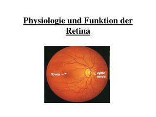 Physiologie und Funktion der Retina