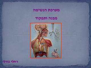 מערכת הנשימה מבנה ותפקוד