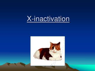 X-inactivation