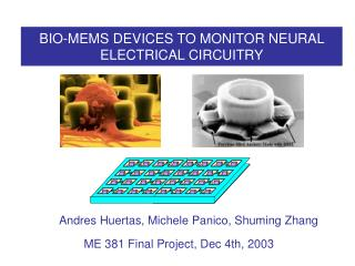BIO-MEMS DEVICES TO MONITOR NEURAL ELECTRICAL CIRCUITRY